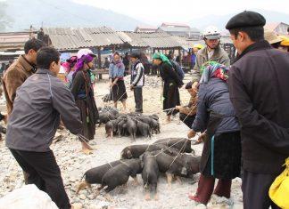 Quán Lợn Cắp Nách Ngon Ở Sapa