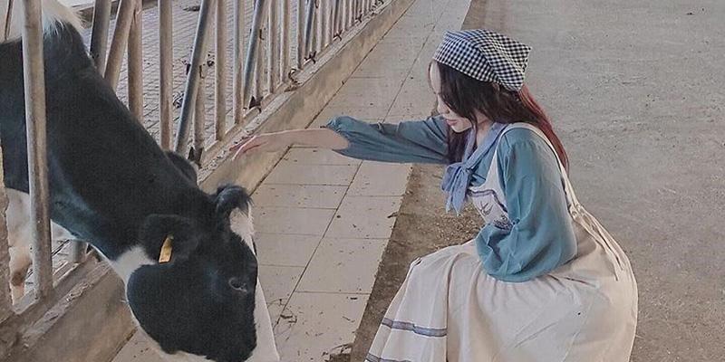 Thưởng thức sữa bò